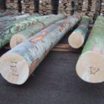 GOOD GRADE BEECH LOGS